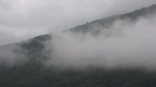 Dampfkondensation mit Schwitzen im feuchten Wald