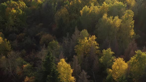 Shooting From Above a Beautiful Autumn Forest Located Near the City