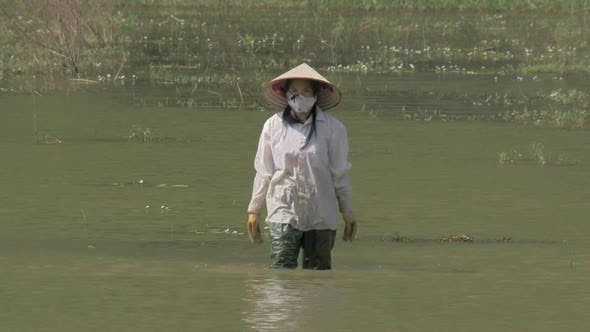 Thumbnail for Vietnamese Woman Finishing Work of Cleaning Water From Weed