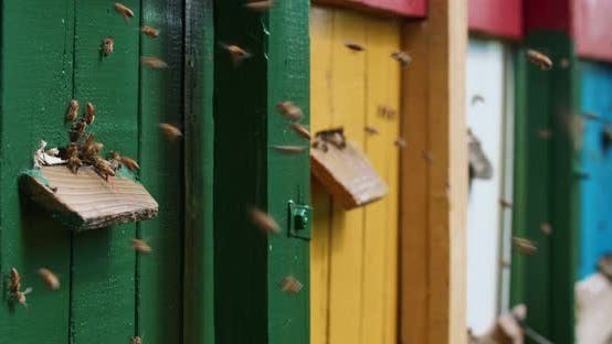 Colorful houses for domestic bees.