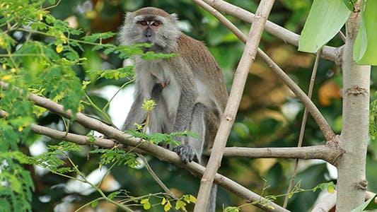 Thumbnail for Wild Monkey 04
