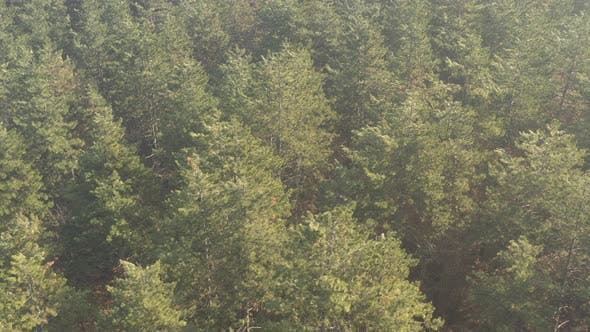 Morning light over the evergreen forest 4K drone video