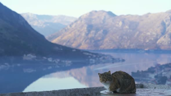 Cat Sits on the Wall of the Kotor Fortress