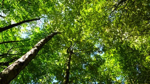 Autumn Forest 5