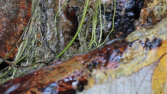 Small Waterfall Changing Focus