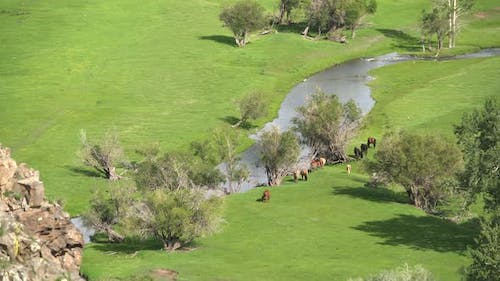 Real Wild Free Horses Grazing by Stream in Green Meadow With Fresh Grass