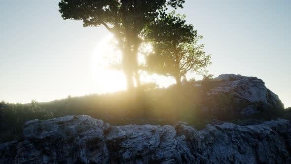 Cover Image for Bäume auf Felsen in Bergen bei Sonnenuntergang