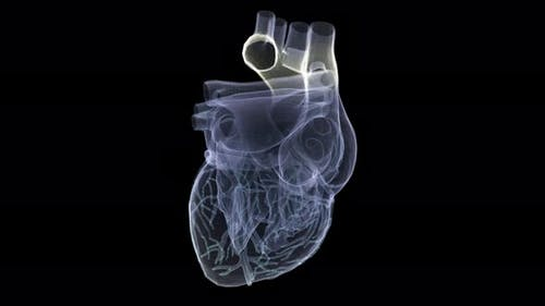 Futuristic Holographic X-ray Scanning Human Body Part - Heart