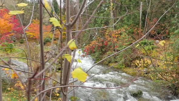Thumbnail for Water Rapids Flowing Down Stream In The Fall 01