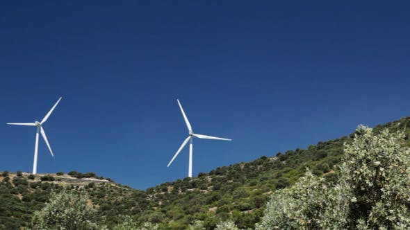 Cover Image for Olive Trees And Wind Power