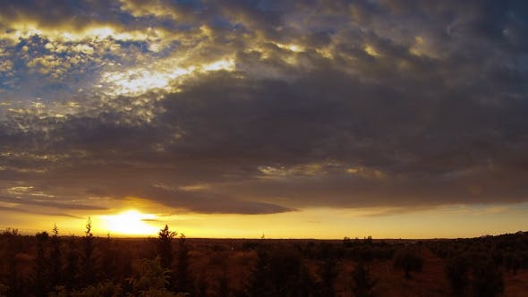 Thumbnail for Olive Grove And Sunset Timelapse