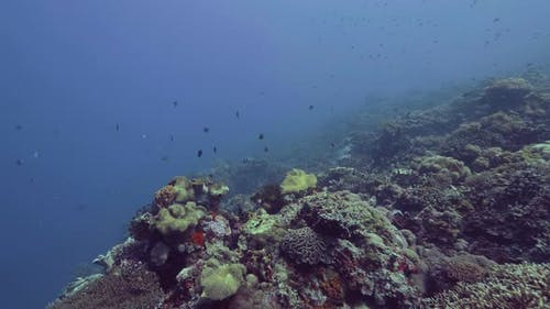 Underwater Landscape Fish Swimming Over Coral Reef on Sea Bottom. Sea Fish Swimming Underwater Ocean