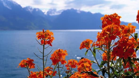 Thumbnail for Flowers Against Alpine Mountains and Lake Geneva on Embankment in Montreux