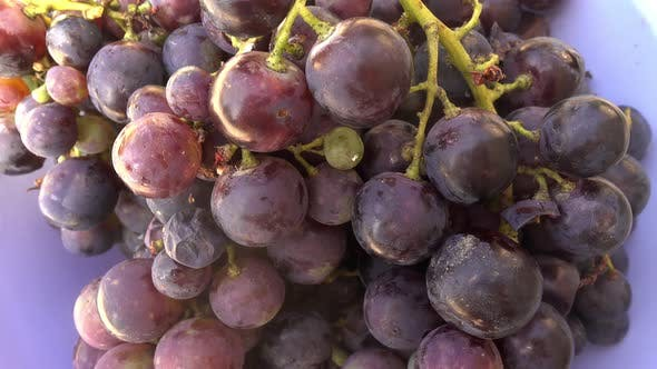Thumbnail for Grapes