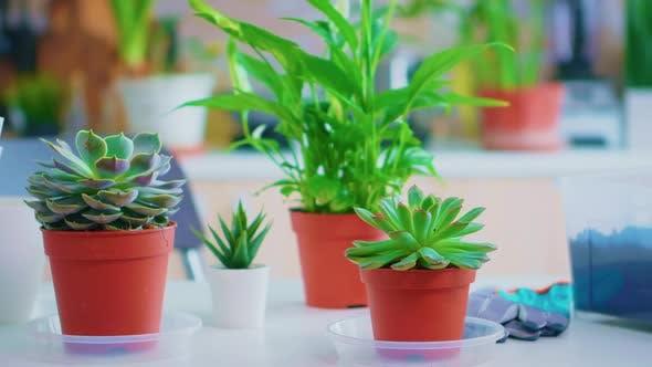 Gardening Tools on Kitchen Table