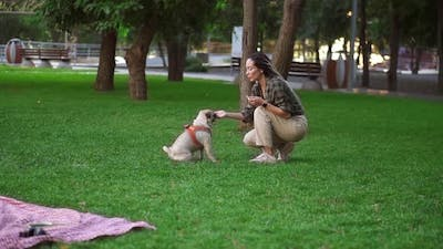 Owner Feeding Pet Outdoors Encouraging Smart Dog for Good Command Execution