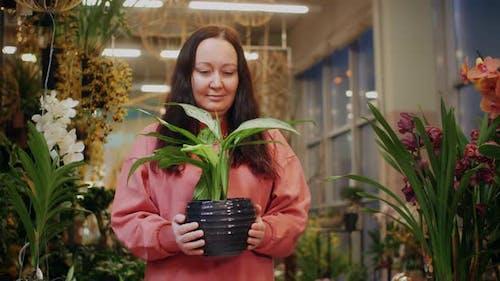 Female Botanist Holding in Hands Green Houseplant in Pot Inside Orangery