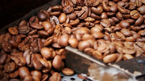 Roasted Coffee In Roasting Machine