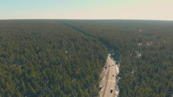 Thumbnail for Green Endless Pine Trees Surround Grey Road with Automobiles