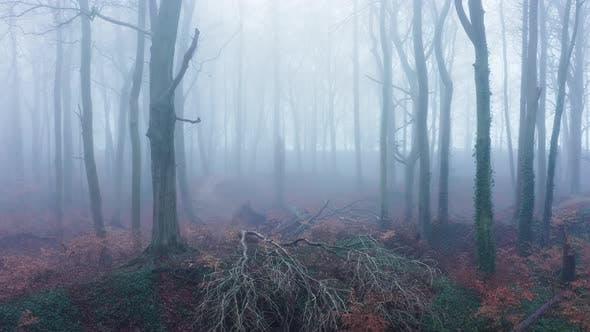 Luftdrohnenvideo eines toten umgestürzten Baumes in Wäldern, geheimnisvollen Winterbäumen und Wäldern mit dichtem Nebel