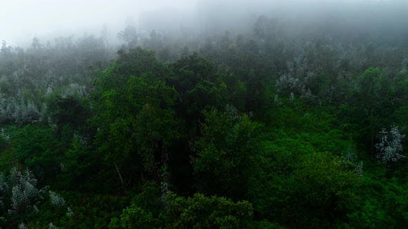 Aerial Video of a Foggy Morning Over Forest