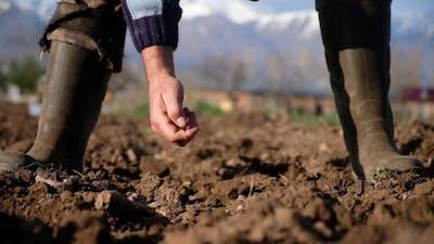Planting Seed