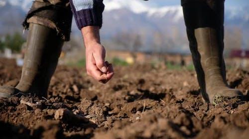 Saatgut pflanzen