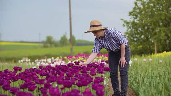 Cover Image for Female Farmer Working on Tulips Field