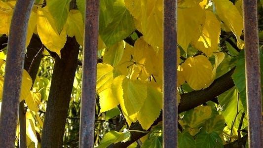 Thumbnail for Autumn Leaves 6
