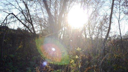 Thumbnail for Autumn Sunshine