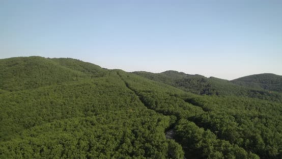 Aerial drone view of big green dense forest in countryside
