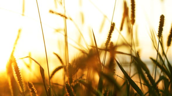 Thumbnail for Background With Grass And Sunlight