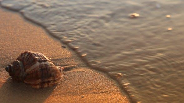 Thumbnail for Seashell On The Golden Sand