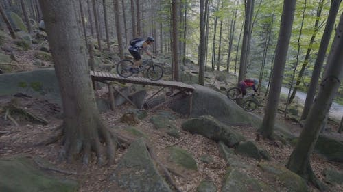 Bikes In The Forest Downhill