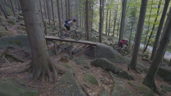 Thumbnail for Bikes In The Forest Downhill