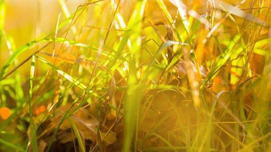 Thumbnail for Autumn Golden Background