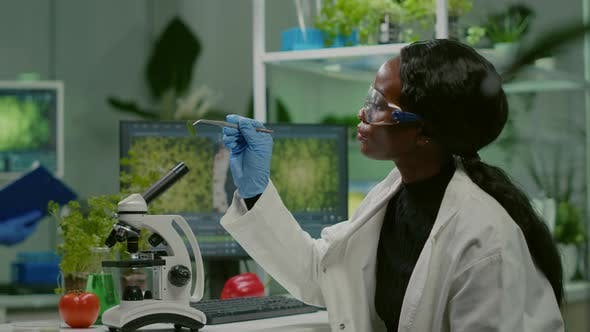 Pharmaceutical Woman Looking at Organic Leaf Sample