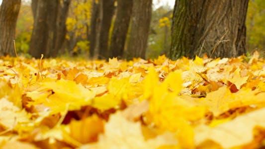 Thumbnail for Autumn Wind