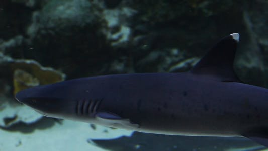 Thumbnail for The Fish 14