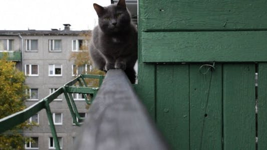 Thumbnail for Russian Blue Cat on Open Balcony