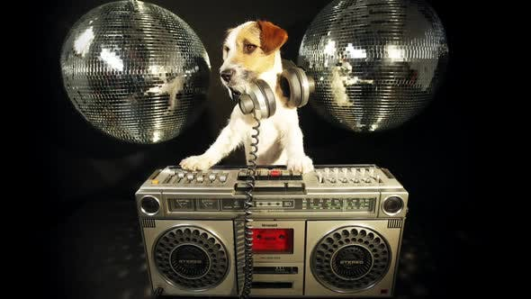 Thumbnail for Dog disco puppy animal pet funny music doggy hifi stereo ghettoblaster