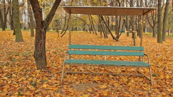 Thumbnail for Autumn Bench - Dolly Shot
