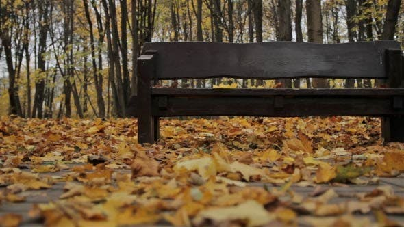 Thumbnail for Bench in Autumn - Dolly Shot