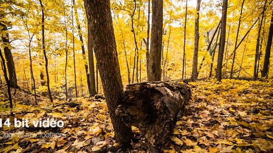 Thumbnail for Gefallener Baum