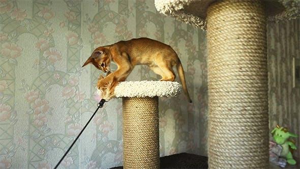 Thumbnail for Playful Kitten