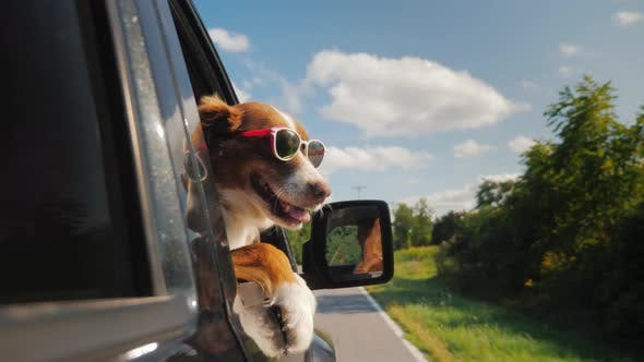 Thumbnail for The Dog Goes To Summer Vacation