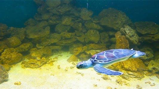 Thumbnail for Sea Turtles 6