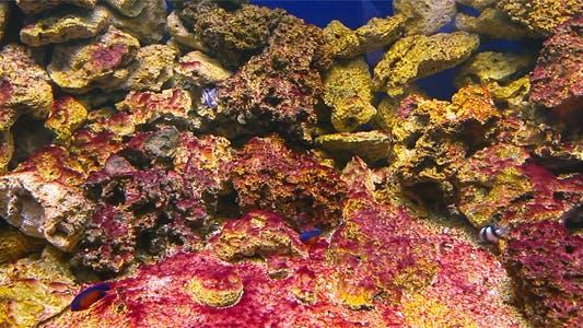 Thumbnail for Coral Fish 1