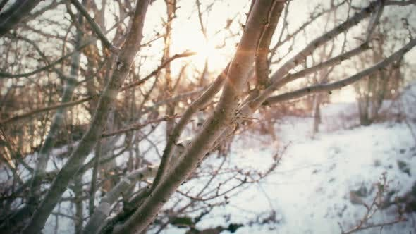 Thumbnail for Sunlight shining through the branches of a tree in a park meadow on a snowy winter day.