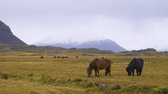 Horse in Mountaine, Wild beautiful Horse in the Icelandic countryside.